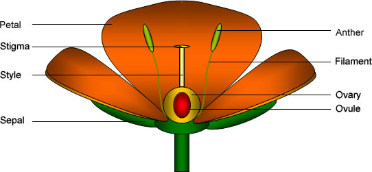 Typical Flower Manufacturers Typical Flower Exporters Typical